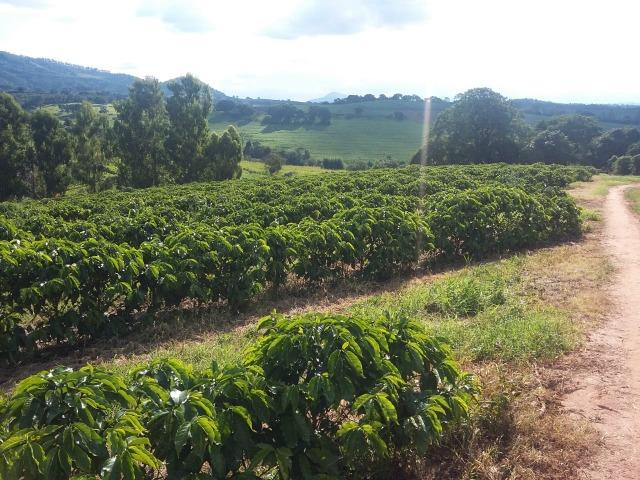 Fazenda Café Sul de Minas - Foto 9