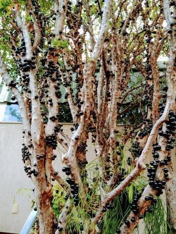 Excelente Casa - 04 Quartos - Conjunto Água Branca - Contagem - Foto 18