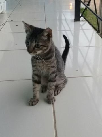 Doação de Gato - Foto 2