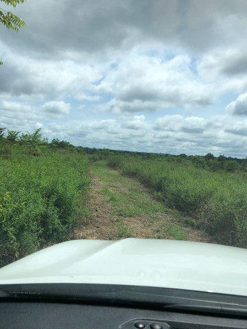 Vendo linda fazenda com 890 hectares na AM-010  liga os municípios de Manaus, Rio Preto  - Foto 6