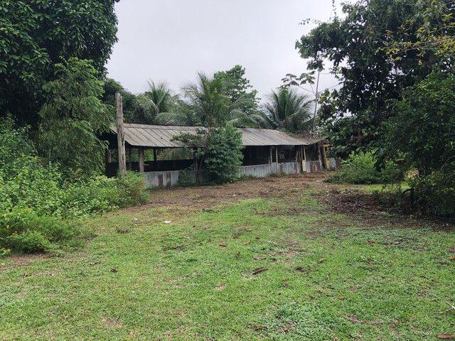 Vendo linda fazenda com 890 hectares na AM-010  liga os municípios de Manaus, Rio Preto  - Foto 14