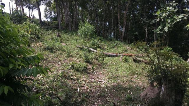 Terreno no Cedro (interior Camboriú) - Foto 2