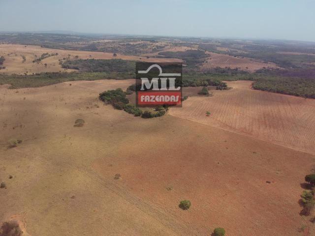 Fazenda à 35 km Goiânia (Beira Rio e Plana) - Foto 5