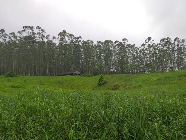 Sitio de 10 hectares no bairro baú em ilhota com plantação de eucalipto - Foto 3