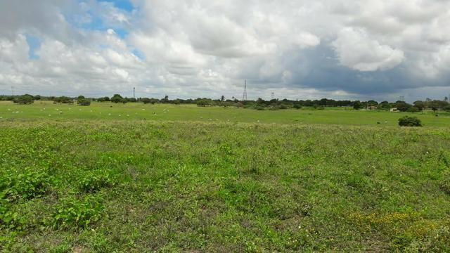 Fazenda com 170 hectares na região de monte alegre - Foto 14
