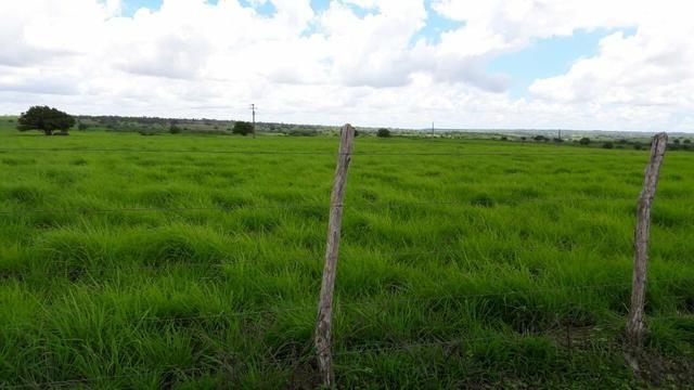 Fazenda com 170 hectares na região de monte alegre - Foto 20