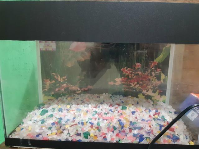 Vendo aquário top com bomba de oxigênio 130 - Foto 4
