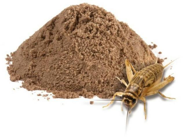 Grilos, Larvas ou Criação de Tenébrio completa - Foto 3