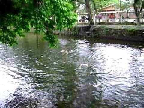 TERRENO RIO DO NUNES - ANTONINA - Foto 12