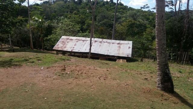 Cidade ilhéus região Japu, Sitio 72 hectares - Foto 12