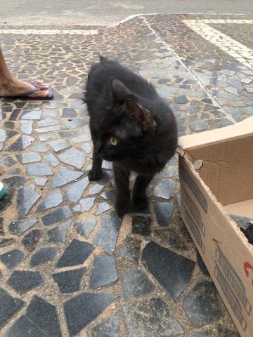 Procura-se lar para Gatos