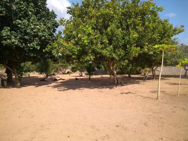 Excelente Sítio na Zona Rural de São José de Mipibu - Foto 4
