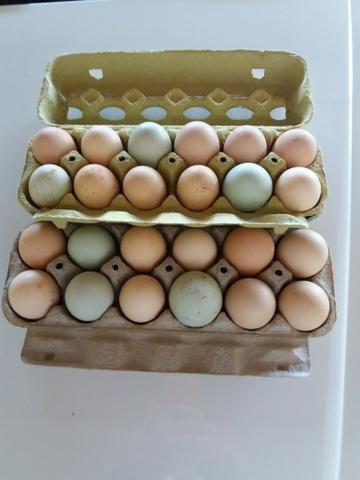 Tenho pra hoje 3 duzias de ovos de indio gigante verdadeiro - Foto 2
