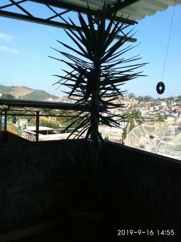 Palmeira Yuca - Foto 5
