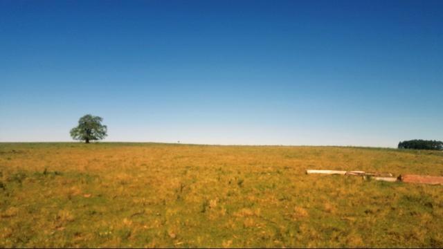 Area Rural - Soja