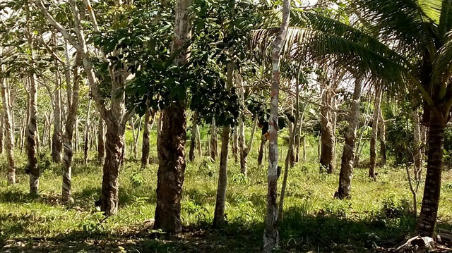 Imóvel rural no interior da Bahia.  - Foto 12