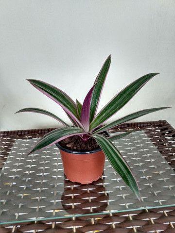 Vendo essas plantas de diferentes espécies - Foto 3
