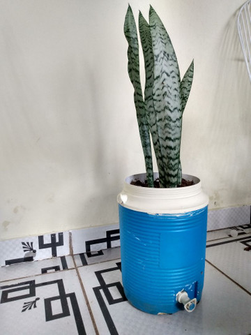 Vendo essas plantas de diferentes espécies - Foto 6