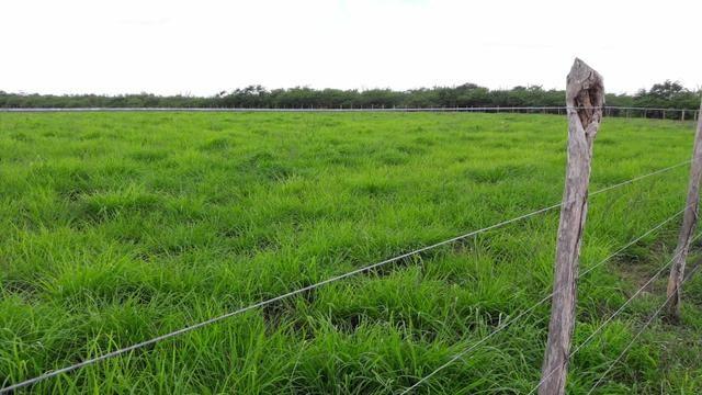 Fazenda com 170 hectares na região de monte alegre - Foto 10