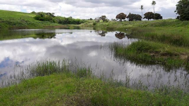 Fazenda com 170 hectares na região de monte alegre - Foto 3