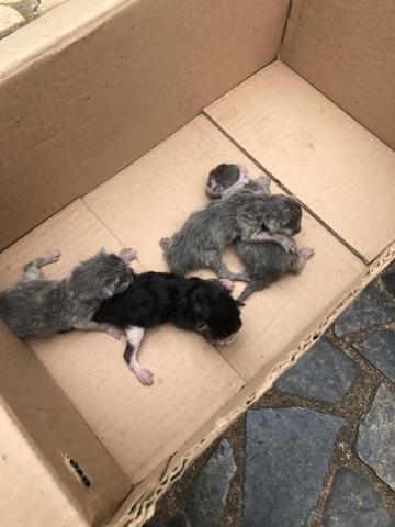 Procura-se lar para Gatos - Foto 3