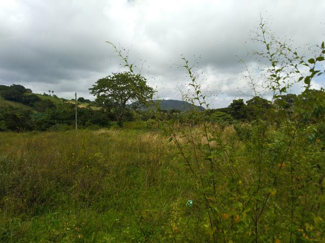 Terreno em Bonito - Foto 3