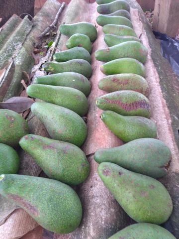 Vendo abacate sou de Anápolis