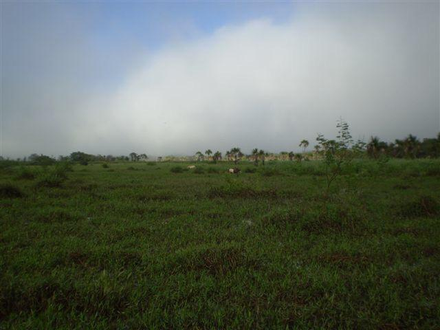 Fazenda dupla aptidão Arinos MG - Foto 2