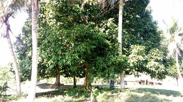 Imóvel rural no interior da Bahia.  - Foto 13