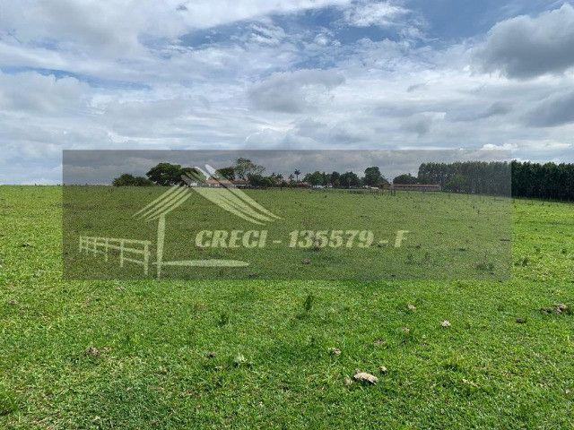 Fazenda com 234 hectares (Nogueira Imóveis Rurais) - Foto 16