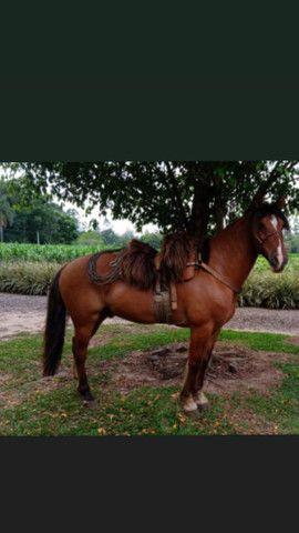Vendo cavalo de patrão.