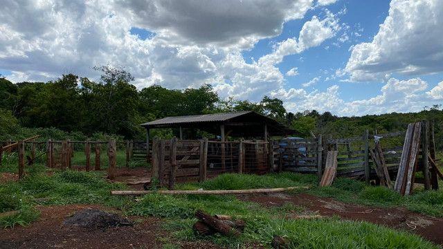 Mangueiro  - Foto 4