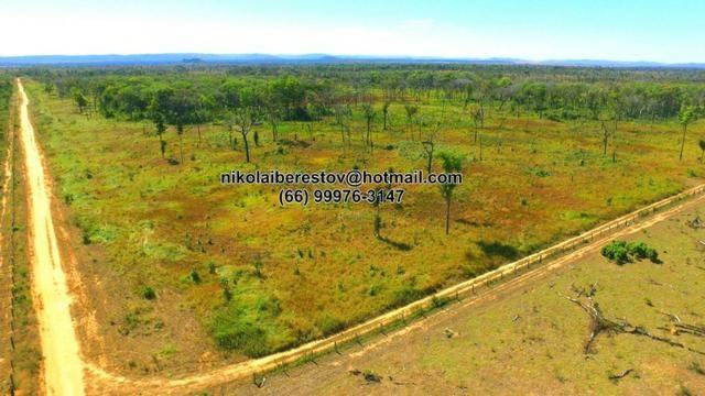 Fazenda nordeste mt 48 hectares nikolaiimoveis