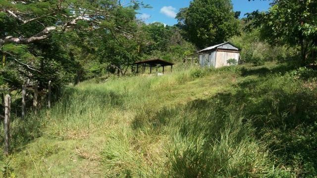 Cidade ilhéus região Japu, Sitio 72 hectares - Foto 14