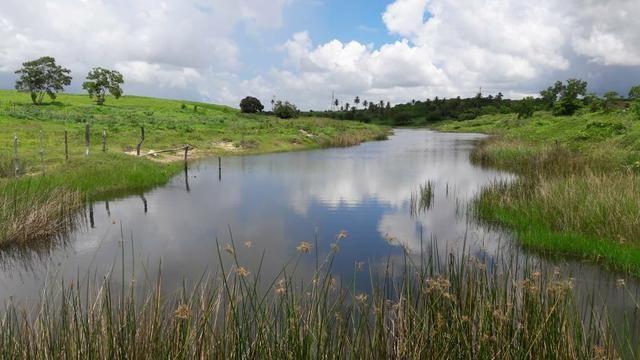 Fazenda com 170 hectares na região de monte alegre - Foto 7