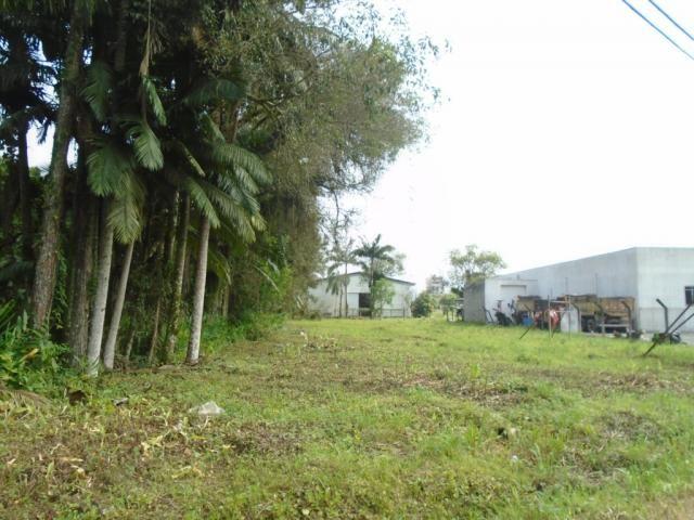 Terreno para alugar em Pirabeiraba, Joinville cod:00444.007 - Foto 2