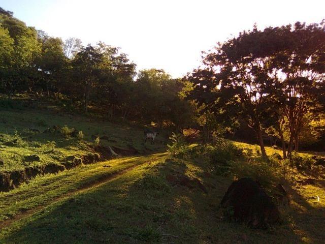 Vendo-Troco Sítio (área de terra rural) entre Leópolis e Cornélio Procópio PR - Foto 5