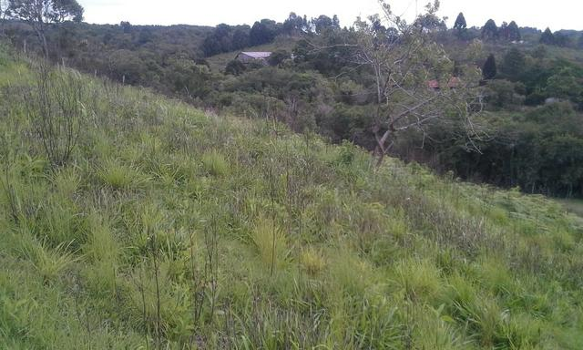 Entrada 30.000 + parc. Torrando terreno pra Chácara com Tanque. 6.000m² Quitandinha-PR - Foto 4