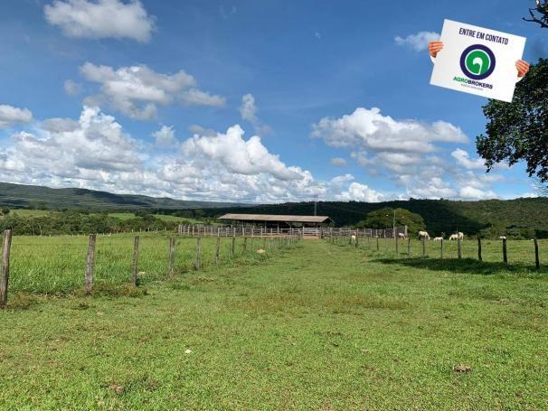 Fazenda 1.040 ha acorizal - Foto 13