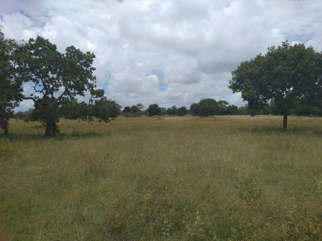 Propriedade Rural de 576 hectares de Mata e Cerrado no Piauí - Foto 6