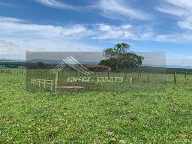 Fazenda com 234 hectares (Nogueira Imóveis Rurais) - Foto 17