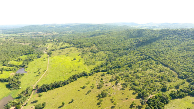 Fazenda com 561 há (116 alq) maior valorização pecuarista próximo a capital - Foto 18