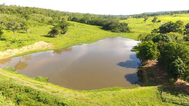 Fazenda com 561 há (116 alq) maior valorização pecuarista próximo a capital - Foto 15