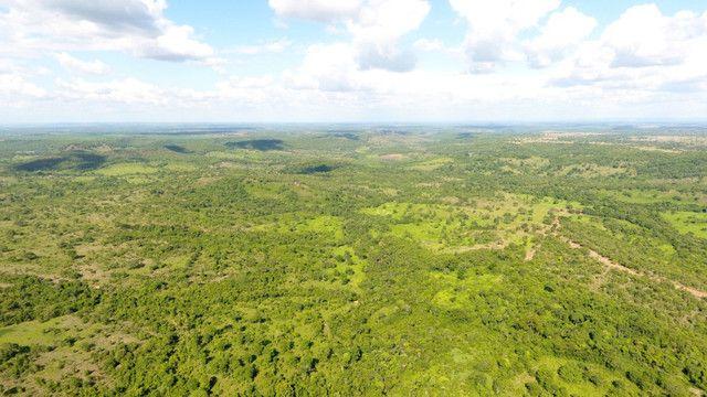 Fazenda com 561 há (116 alq) maior valorização pecuarista próximo a capital - Foto 17