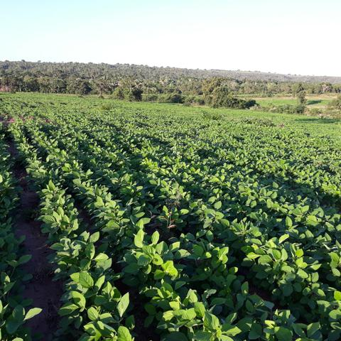 Fazenda centro sul do Maranhão - Foto 7