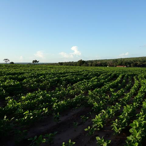 Fazenda centro sul do Maranhão - Foto 5