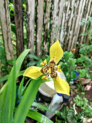 Vendo essas plantas de diferentes espécies - Foto 4