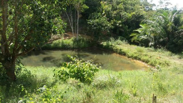 Cidade ilhéus região Japu, Sitio 72 hectares - Foto 4