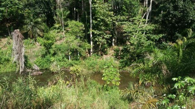 Cidade ilhéus região Japu, Sitio 72 hectares - Foto 15