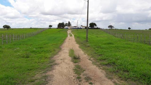 Fazenda com 170 hectares na região de monte alegre - Foto 4